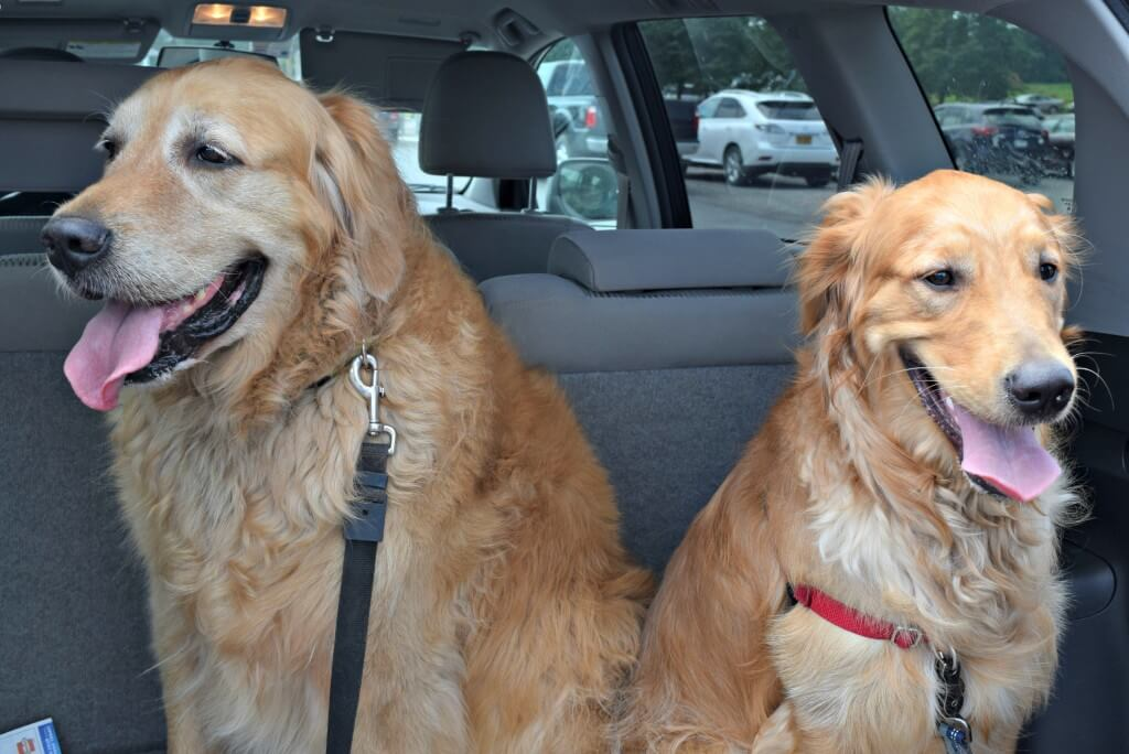 Clearly the boys love attending any dog friendly event! Look at those smiles!