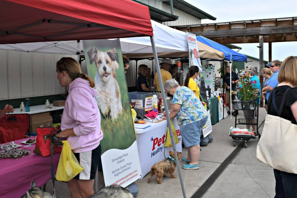 Walking down the aisles of vendor booths at Grossmans Dog Days event.