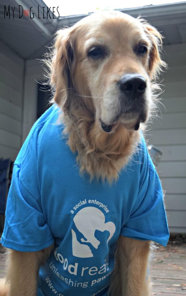 Our dog Harley modeling a new t-shirt!