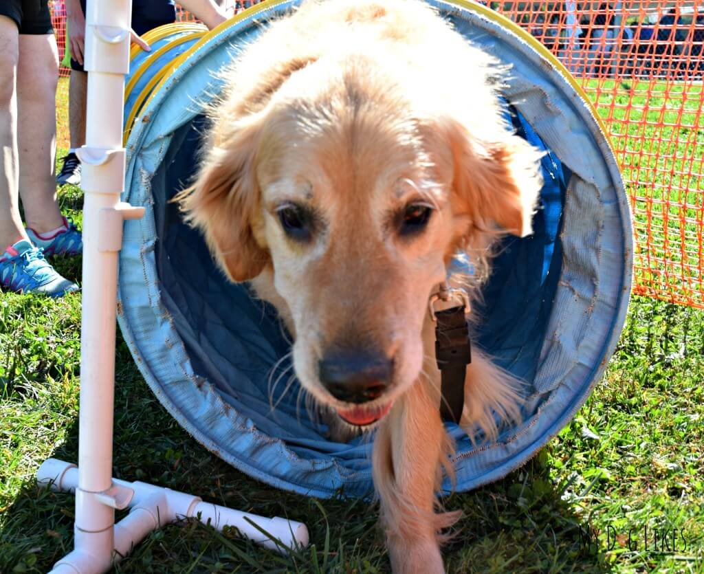 We were so proud of Harley for tackling the dog tunnel on the agility course!
