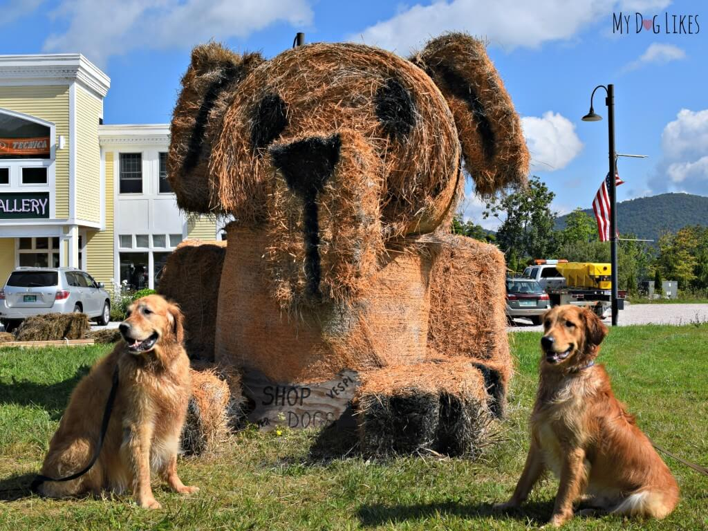 Harley and Charley posing with a giant Golden Retriever statue in Killington, Vermont