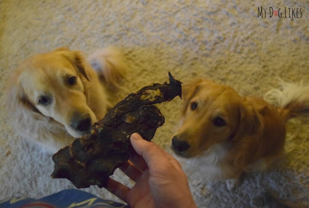 Our dogs have had enough of the photos and are ready to taste the Kangaroo Jerky from Best Bully Sticks!
