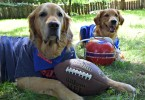 Harley and Charlie are huge Buffalo Bills fans!