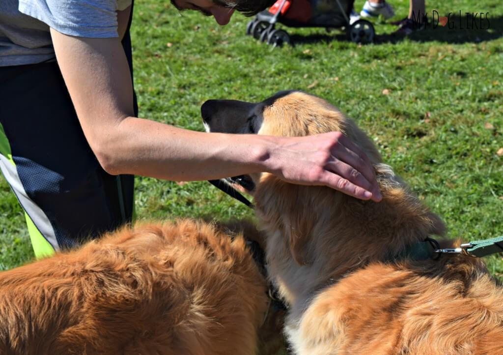 Meeting some new Golden friends at Lollypop Farm's Barktober Fest