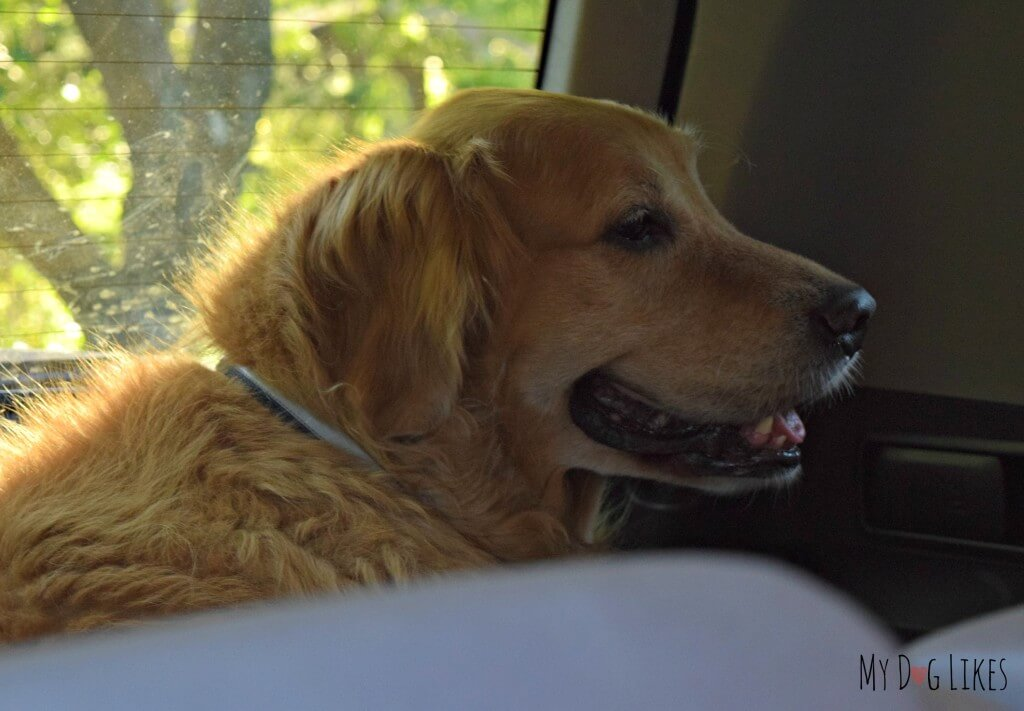 Harley loaded up in the car and excited to head out on a weekend trip to Killington, Vermont