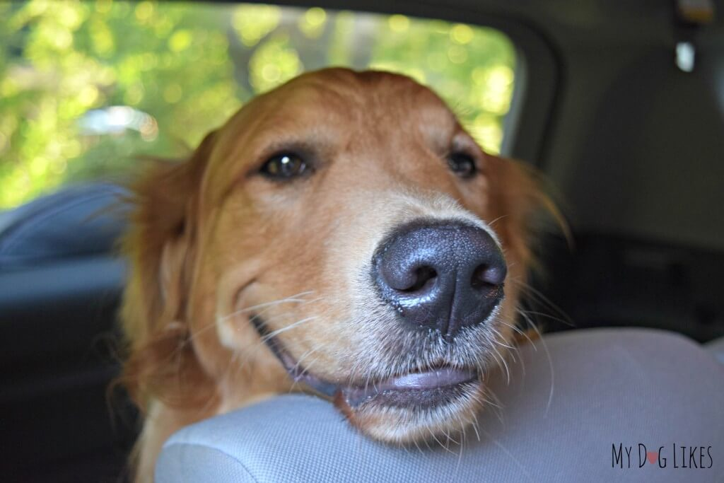 A smiling Charlie is excited to embark on a weekend road trip