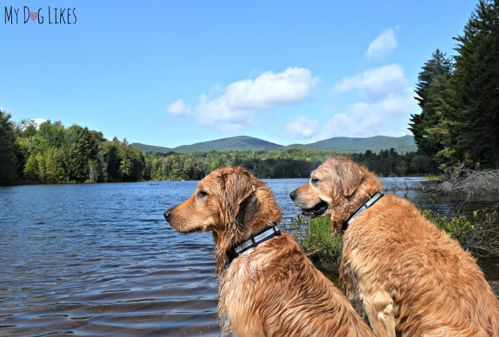 Harley and Charlie overlooking Colton Pond in Killington Vermont