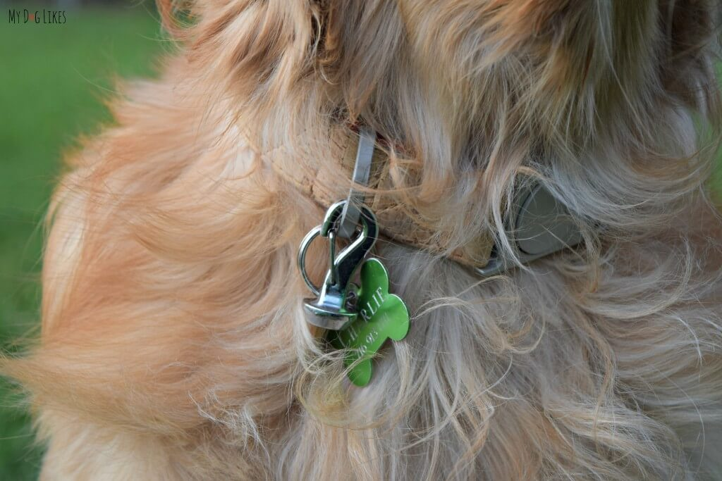 The magnetic dangle of the Magic Latch attached to Charlies collar