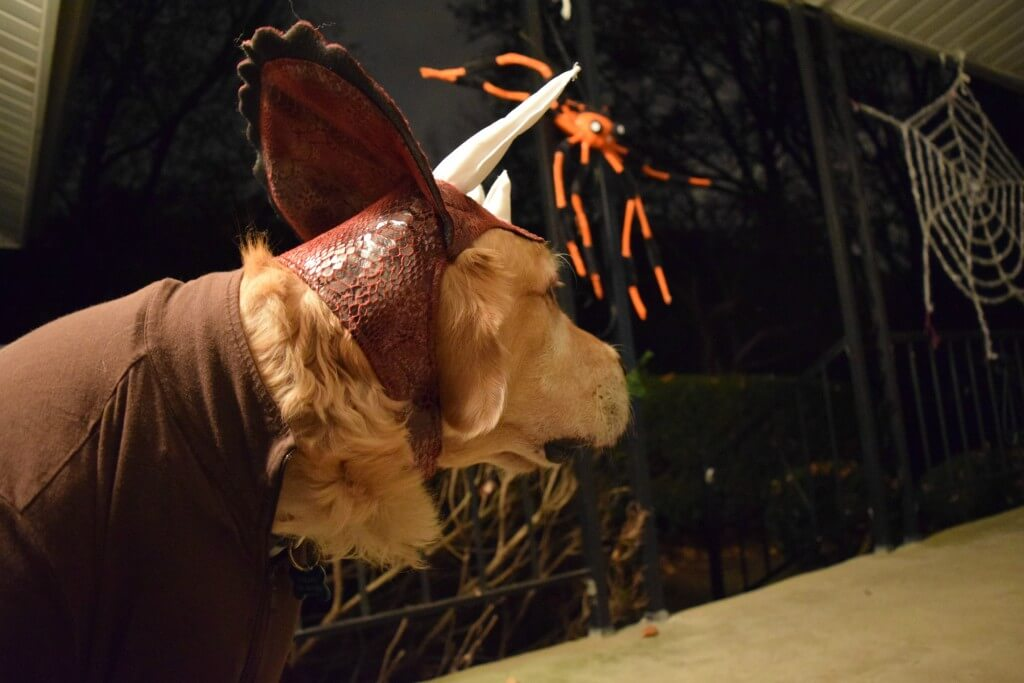 Harley in his Animal Planet dog dinosaur costume for Halloween!