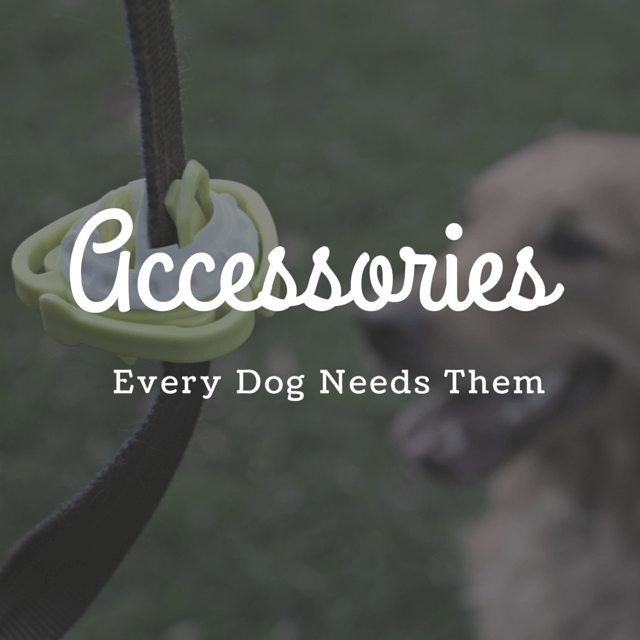 MyDogLikes 2015 Holiday Gift Guide - Accessories - Every dog needs them