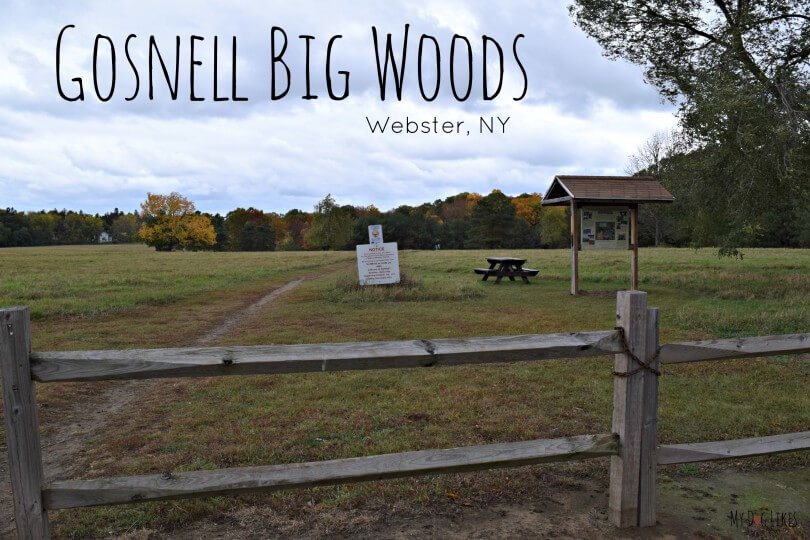 MyDogLikes continues its spotlight on dog friendly parks with this feature on Gosnell Big Woods in Webster, NY