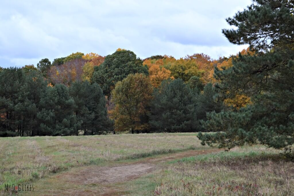The view from the Big Field Trail at Gosnell Big Woods Preserve in Webster, NY