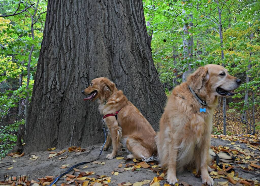 Harley and Charlie posing in front of a big tree in the old growth forest of Gosnell Big Woods