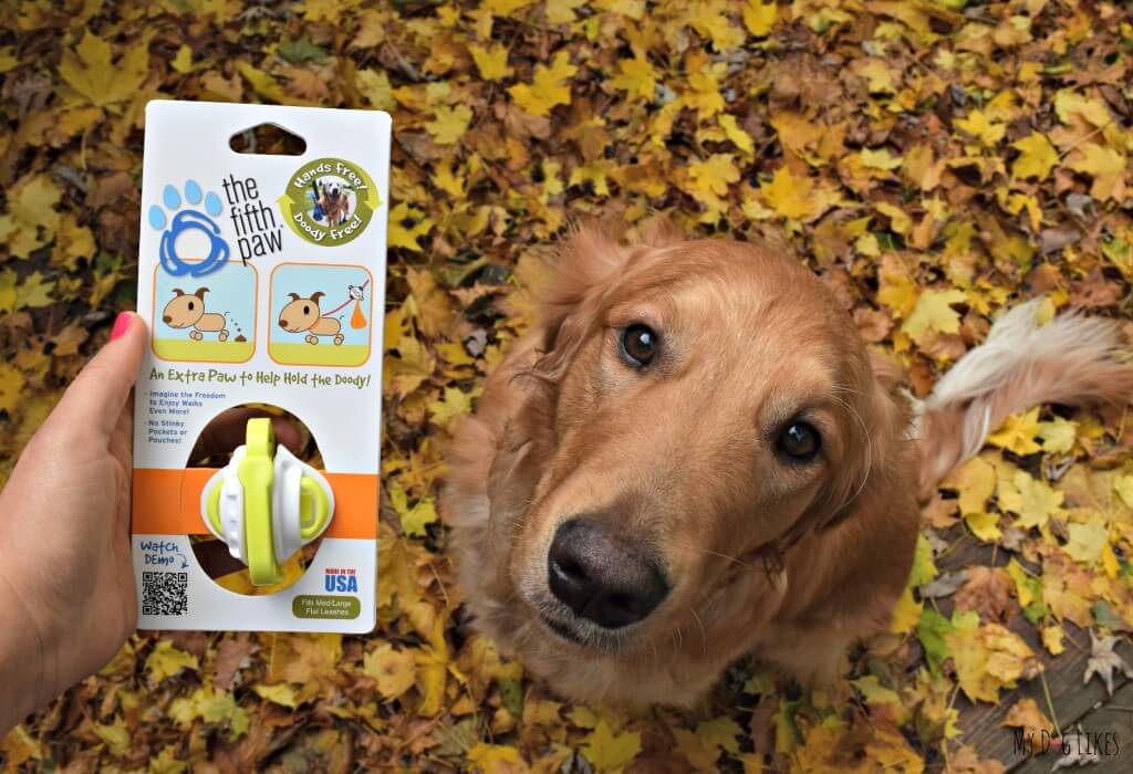 Getting ready to test out The Fifth Paw leash attachment with our Golden Retriever Charlie