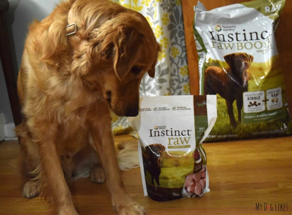 Charlie about to try Nature's Variety Instinct Raw Medallions. Follow along as we sample all the forms and flavors of the Instincts Diet!