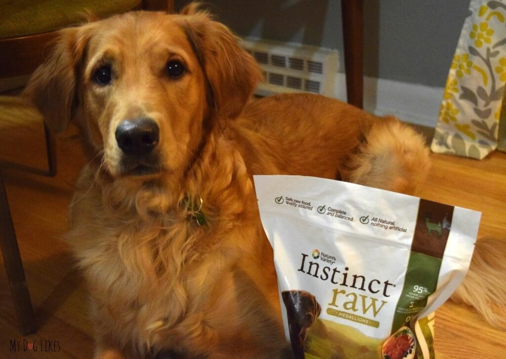 Charlie getting ready to review Nature's Variety Instinct Raw Medallions!