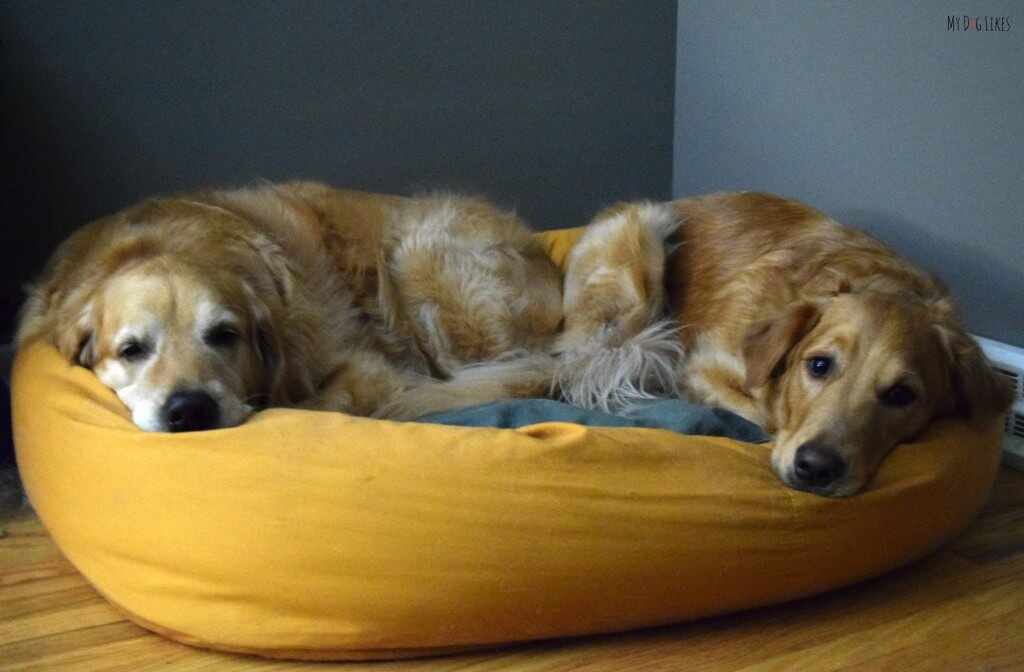 Harley and Charlie can both fit in our West Paw Design's Bumper Bed!