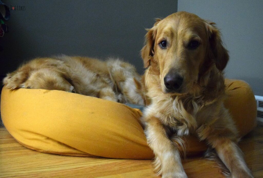 As you can see, our Goldens love West Paw Design's bumper dog beds