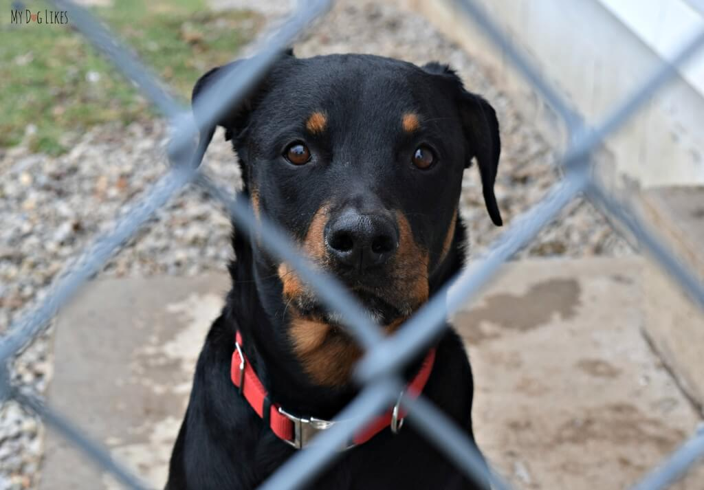 A dog for adoption at Scottsville Veterinary Hospital and Pet Adoptions near Rochester, NY