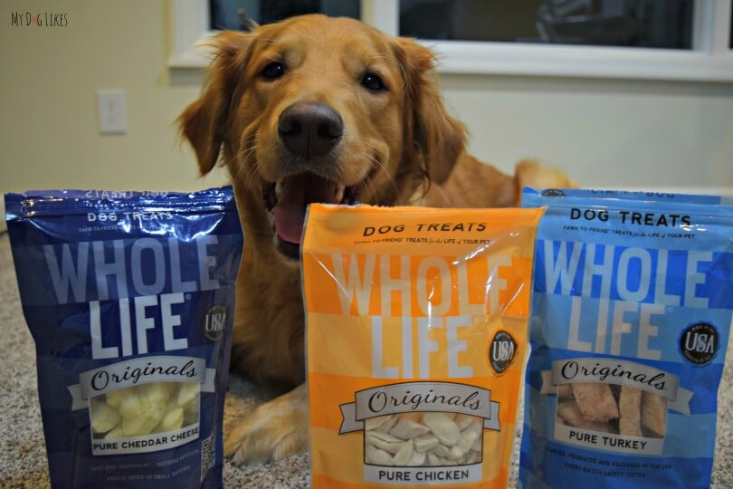 Charlie getting ready to try the Whole Life Originals line of freeze dried dog treats!