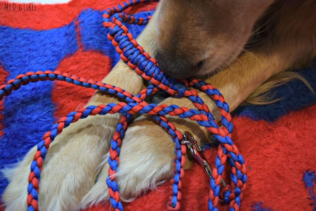 Pudin's Paw makes beautiful custom braided paracord dog accessories!