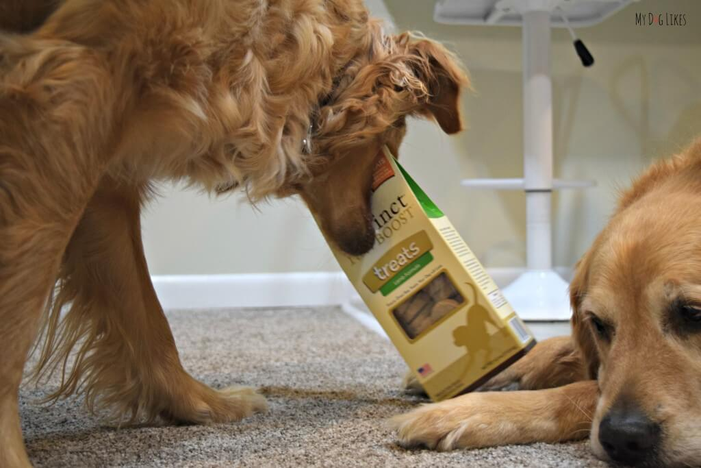 Charlie being a bad dog and helping himself to some Nature's Variety Instinct dog treats!