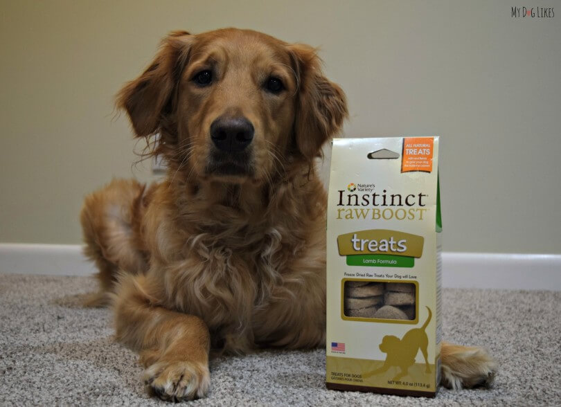 MyDogLikes reviews Nature's Variety Instinct Raw Boost in our search for the best dog treats!