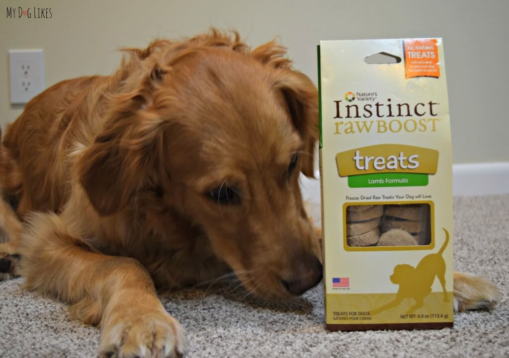 In our ongoing quest to highlight healthy dog treats, MyDogLikes reviews Nature's Variety Instinct Raw Boost Treats!