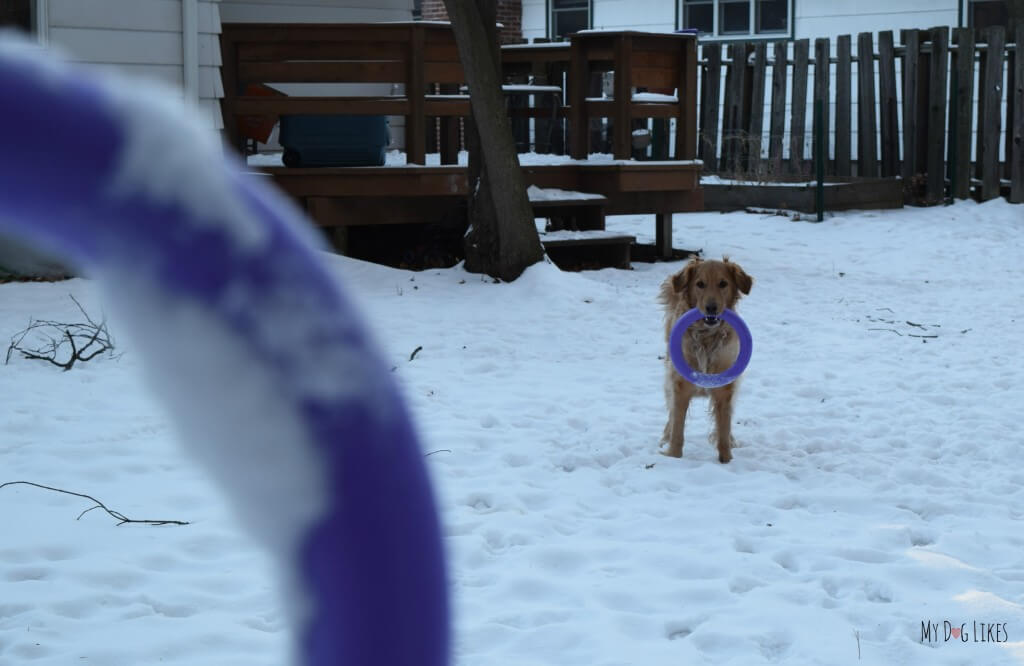 MyDogLikes reviews Puller - a dog toy and training device in one!