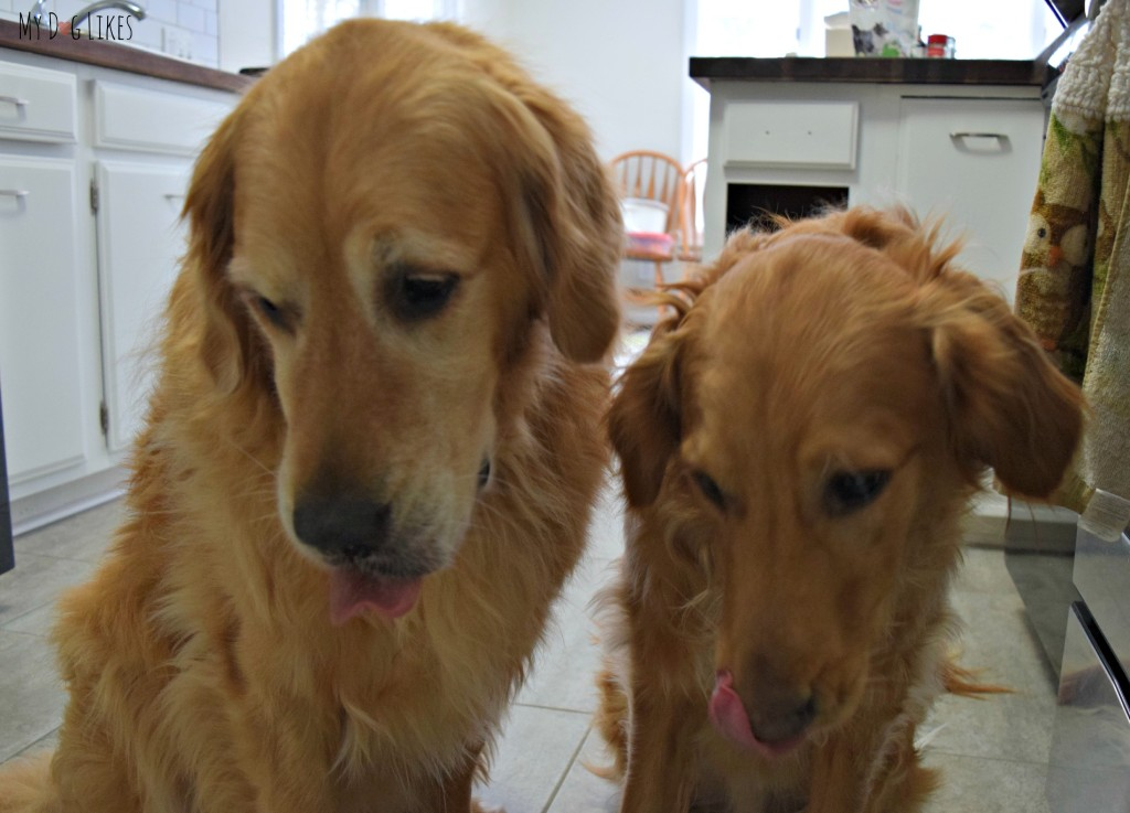 Paws Barkery's SnickerDoodle treats were enough to get these dog tongues licking their chops!