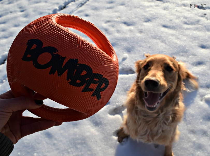 Like most dog owners we are constantly on the lookout for durable dog toys. MyDogLikes puts the Zeus Bomber to the test!