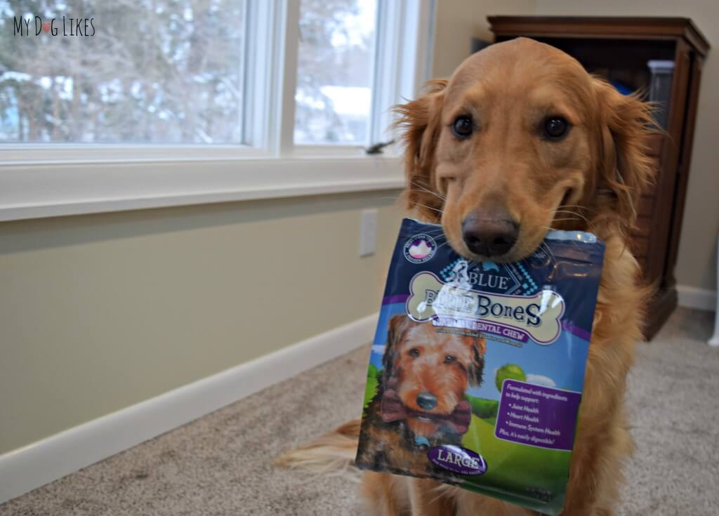 Charlie loves BLUE bones - Dog Dental Chews!