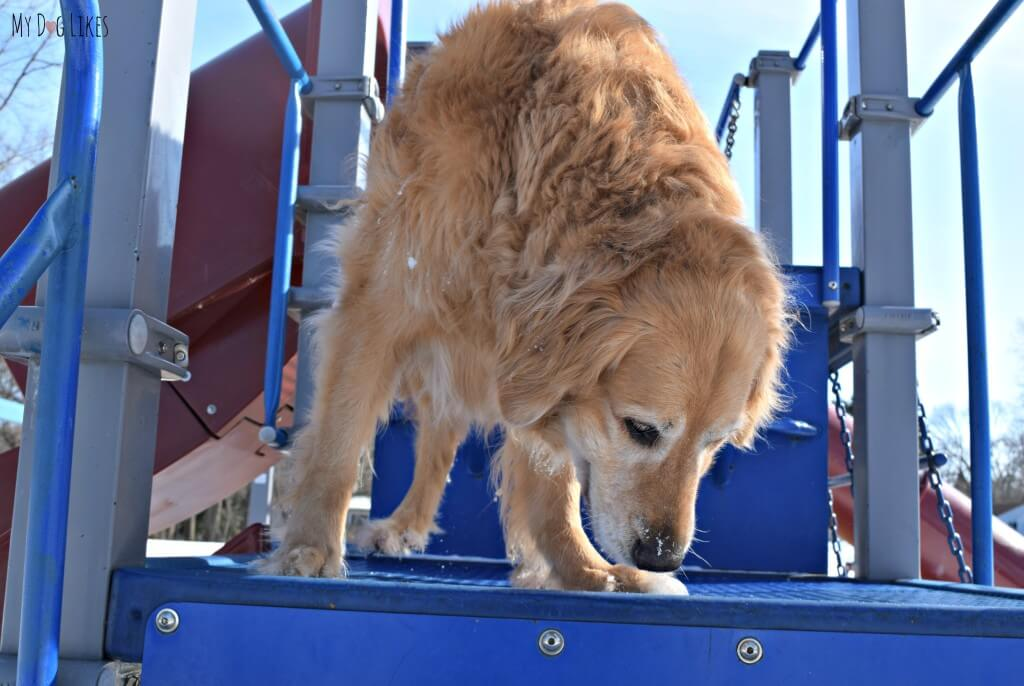 Playgrounds are a great spot to get your dogs some exercise or practice some of their agility skills!