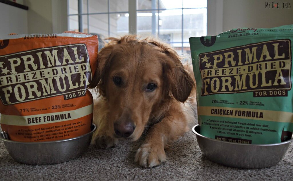 Continuing in our exploration of commercial raw feeding options, MyDogLikes reviews Primal Freeze Dried Raw Dog Food - a convenient and shelf stable option!