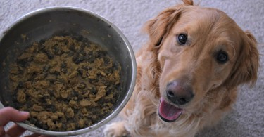 Incorporating primal freeze dried dog food into Charlie's dinner