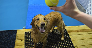 Having a blast in CoolBlue's swimming pool for dogs!