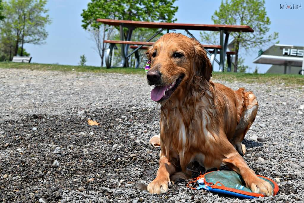 Charlie at Kershaw Park in Canandaigua
