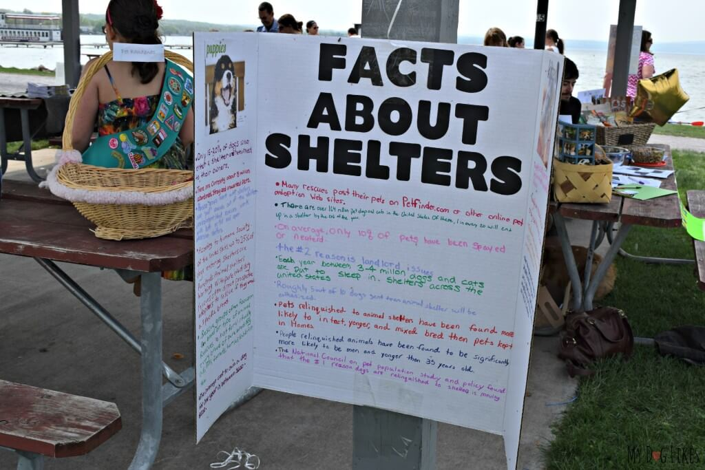 The girl scouts learned and shared information about pet shelters during the course of their bronze award project