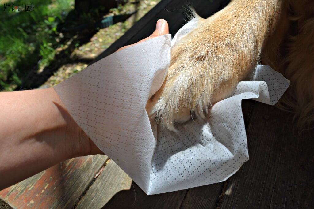 Cleaning Harley's paws with some dog grooming wipes from Isle of Dogs