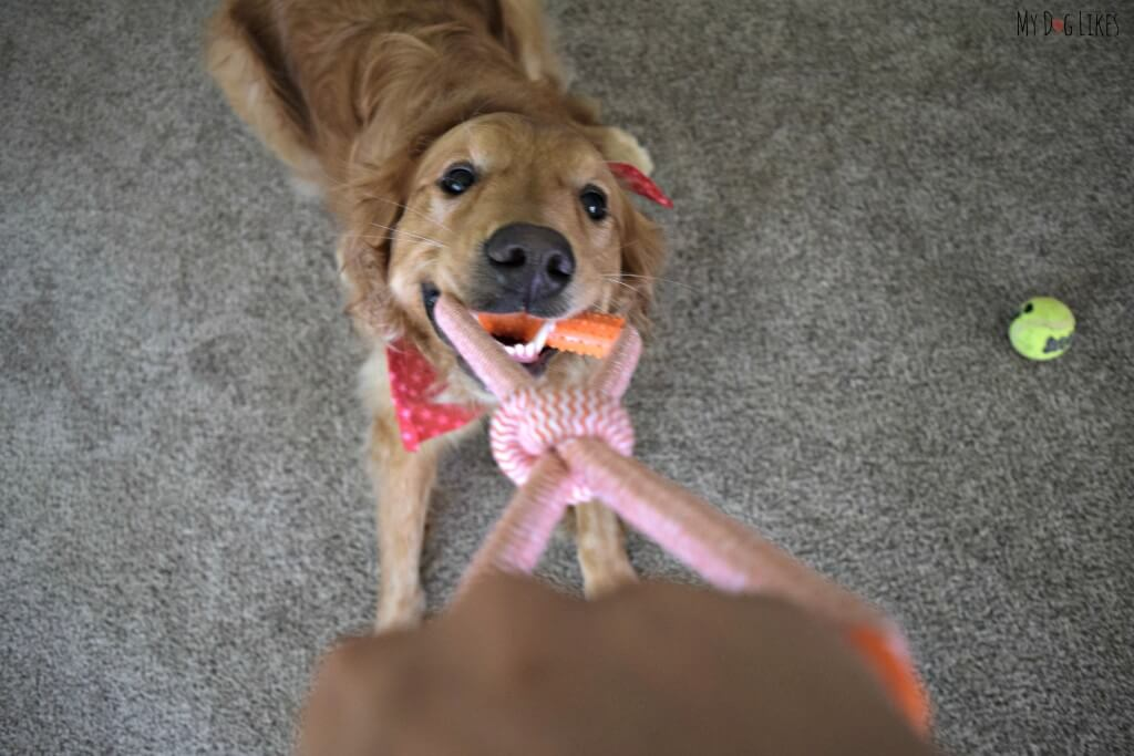 Looking for the best dog tug toys? Check out the Nylabone Dura Toy!