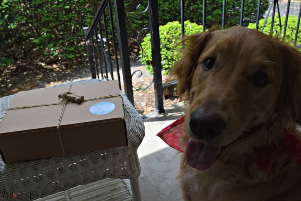 Thinking of purchasing a dog subscription box? Browse the MyDogLikes reviews first!