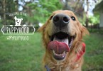 MyDogLikes is excited to let you know about Puppyhood.com - an amazing free resource for dog owners. Stop by for advice on puppy training, health, obedience and more!