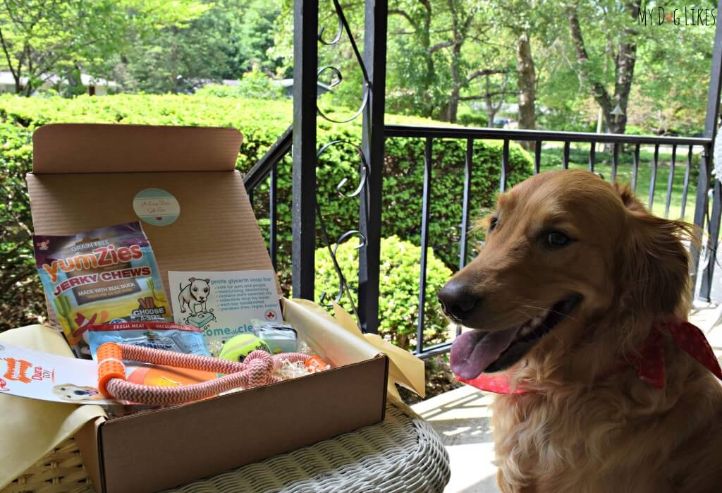 Charlie posing with his first PawPals With Annie subscription box