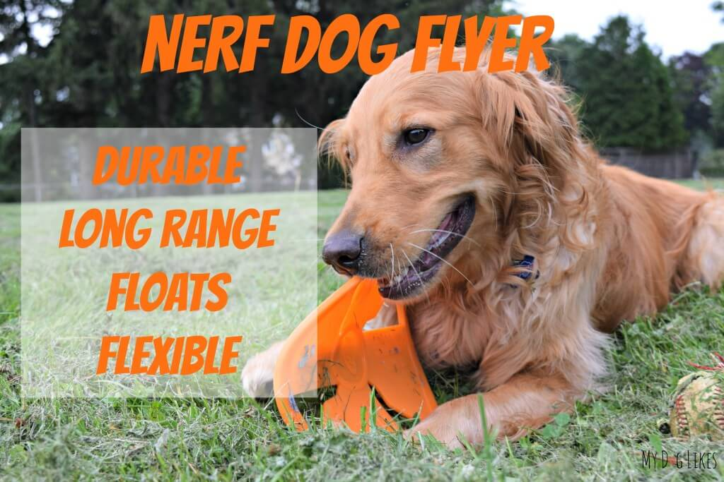 MyDogLikes highlights all the best features of the NERF Dog Frisbee in our official review!