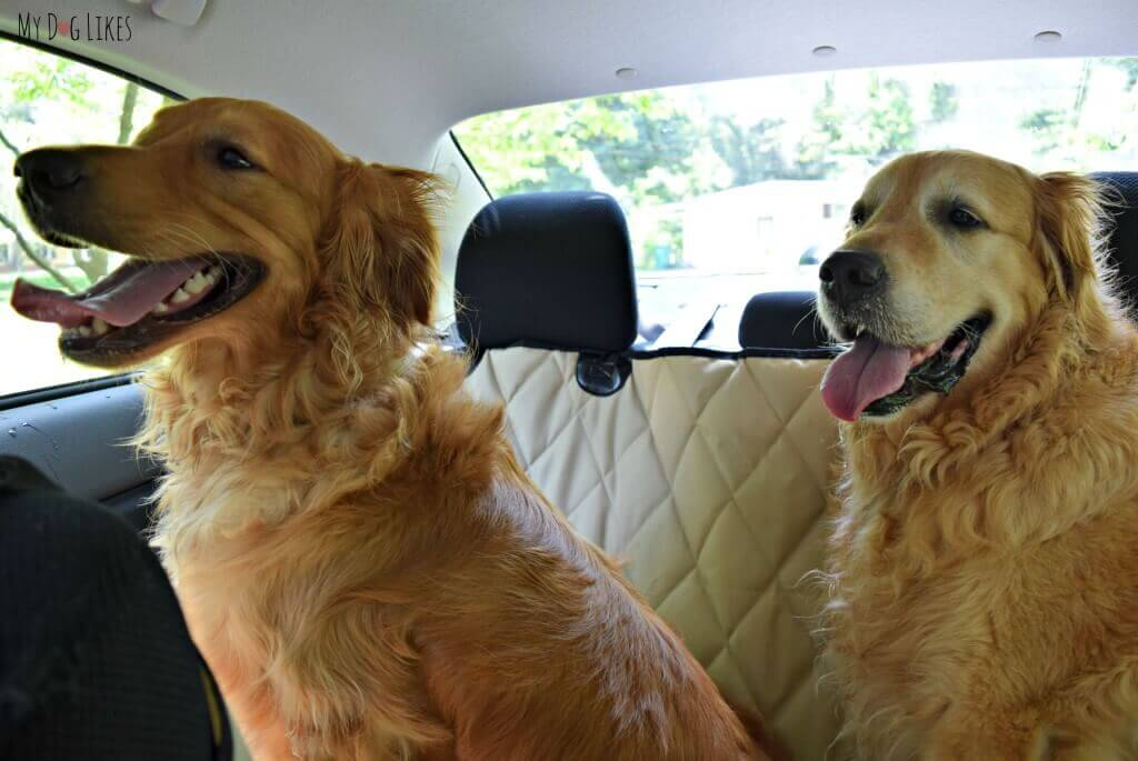 Harley and Charlie enjoying a ride in the car during our 4Knines seat cover review and test!