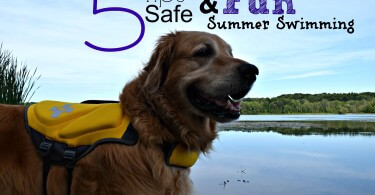 Dog Swimming Safety Tips from MyDogLikes