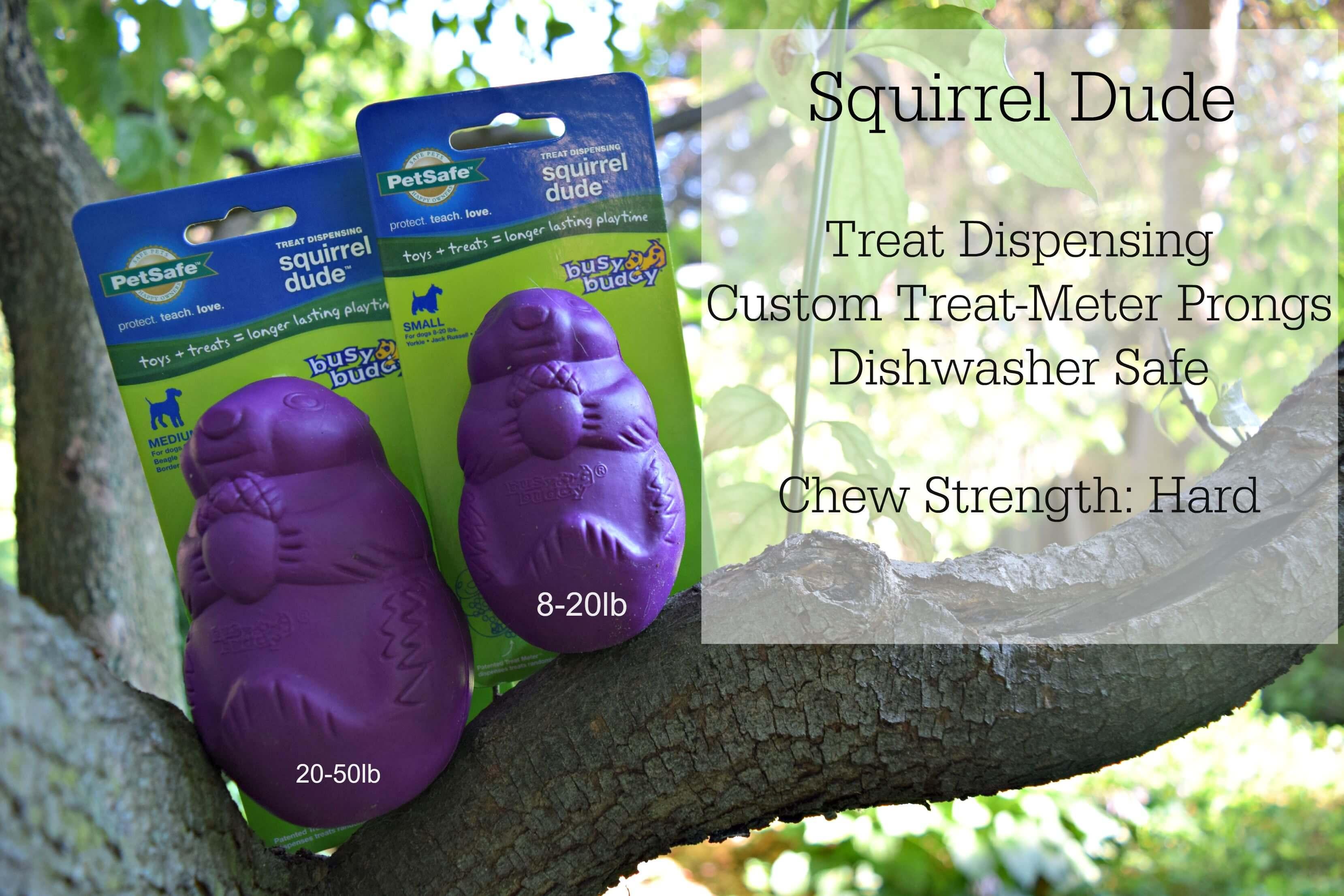 Squirrel Dude