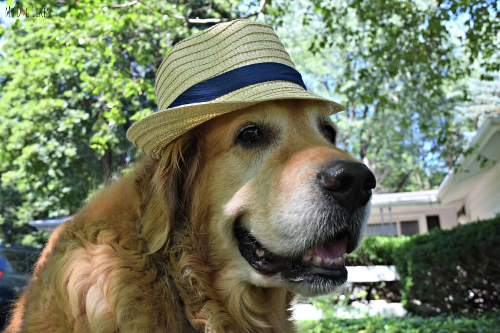 What's cuter than a dog wearing a hat? Not much!