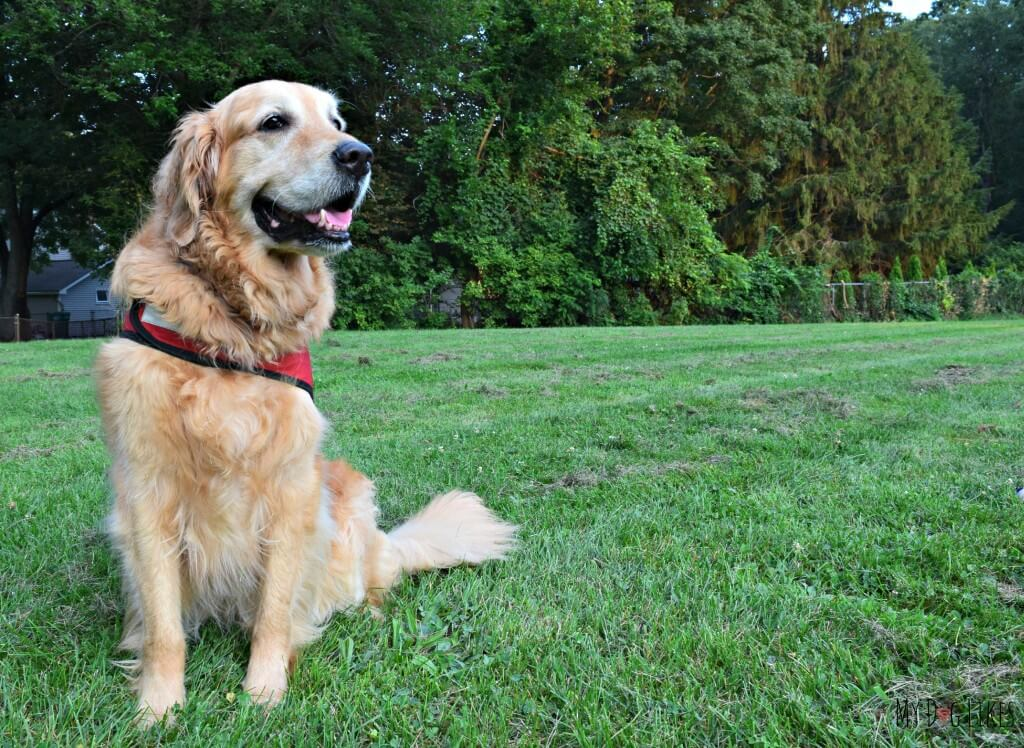 Wondering what to do about Flea Protection for Dogs? Have you ever considered a natural solution? Check out our review of Dr. Harvey's all-natural pest protection products!
