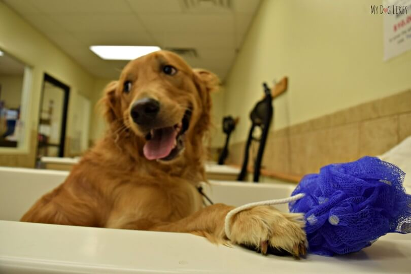 Someones excited for bath time at the PetSaver Superstore self wash station!